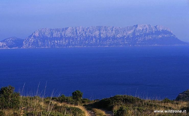 Isle of Tavolara - View from Capo Figari
