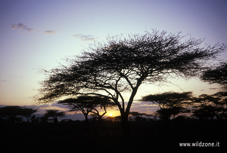 Sunset in Northern Kenya