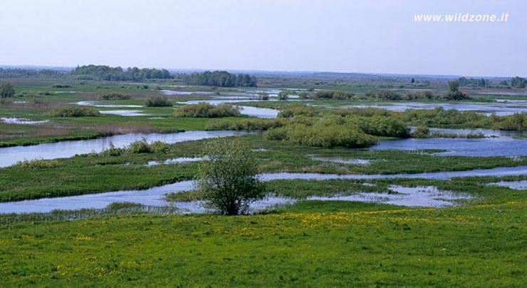 Biebrza River National Park