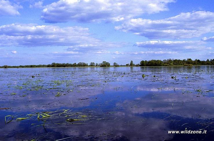 Flooded area along Biebrza river